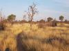 Harry-Claasen-Safaris-Scenery