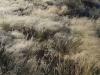 Harry-Claasen-Safaris-Scenery2