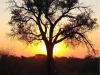 Harry-Claasen-Safaris-Sunset3